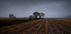 Photo of Winter Fields