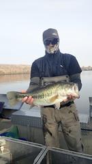 Largmouth Bass