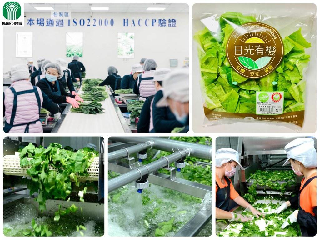 【新聞圖片5】桃園市農會有機蔬菜截切場