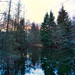 Late evening mirror in the forest