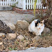 The Cats of University Heights: Lovely