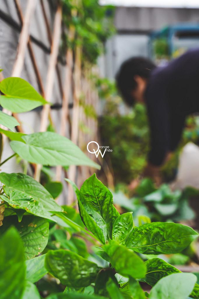 Toasteria Cafe,吐司利亞,活動紀錄,活動攝影,紀實攝影,活動紀實,便宜,攝影,工作室,優質推薦,植栽