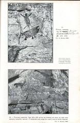 Pintura rupestre: Onça atacando anta (Baldus 1937)