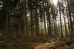 Forest Hunter Hut Forests Hunting Edit 2021