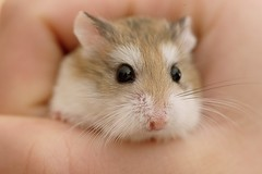 Hamster - MacroMondays Gift
