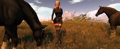 saddle up 1