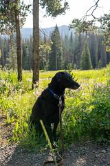 Luke at Brooks Falls Wyoming