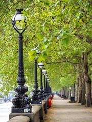 Chelsea embankment in full leaf - London