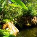 gardens - Entopia Butterfly Farm - Teluk Bahang, Penang Island, Malaysia - Feb 2020