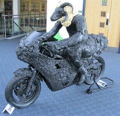 Loaghtan Sheep TT rider