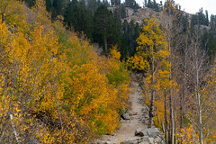 Bishop Creek Canyon