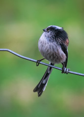 Photo of The bird on the edge of wire