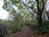 Autumn in Cumbernauld Glen