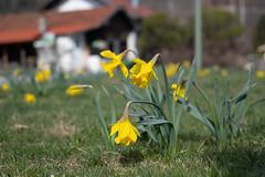Coronares Frühjahr