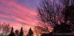 January 7, 2021 - A gorgeous sunrise as seen from Broomfield. (David Canfield)