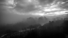Photo of Misty Wood, Boden Boo, Erskine, Renfrewshire, Scotland, UK