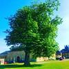 Wynnstay Park