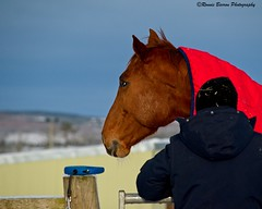 Photo of one woman and her mare