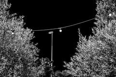 Bushes and surrounding sky [explored - Jan 10, 2021]