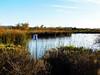 San Joaquin Marsh Winter's Day