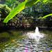 gardens - Entopia Butterfly Farm - Teluk Bahang, Penang Island, Malaysia