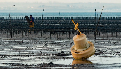 Whitstable oyster beds