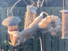 Photo of The Nut Burglar