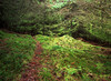 Mossy Path, Skiff Woods, Howwood, Renfrewshire, Scotland, UK