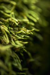 12/365 - Moss