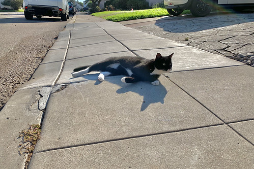 The Cats of University Heights: Tails