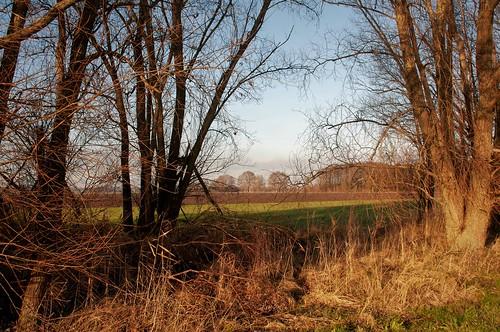 Knarweg Flevolandschap