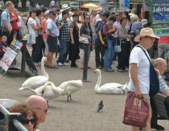 Photo of Love how these birds are totally nonplussed by the tourist crowd