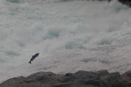 Wells Gray PP - saumon chute Bailey