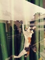 013: curtain climber