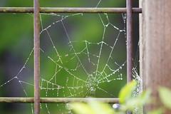 9/365 wet web