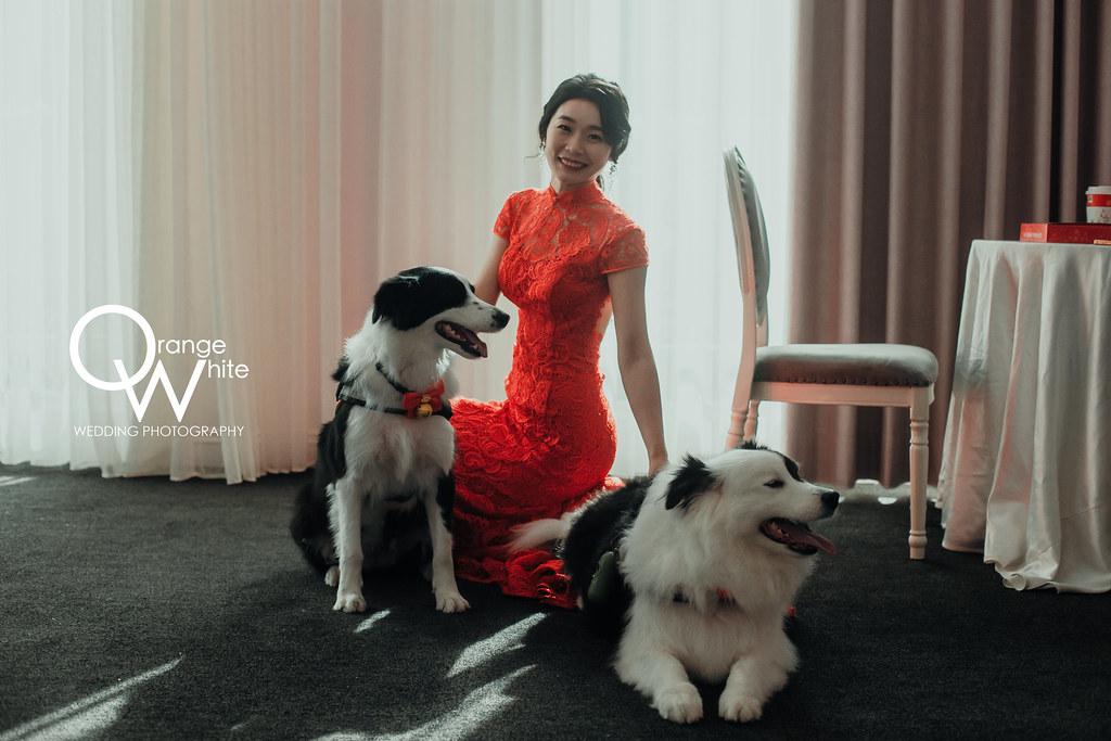 Fantasia Wedding Dress,婚攝,婚禮攝影,婚禮紀實,婚禮紀錄,婚紗攝影,橘子白,青青食尚會館,寵物,邊境,邊境牧羊犬,便宜,推薦,工作室