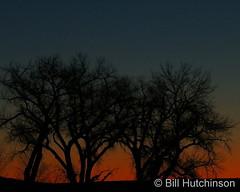 January 12, 2021 - First light. (Bill Hutchinson)