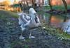 Mardy mucky duck