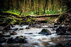 Photo of 015/365 - Upstream