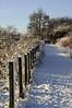 Snowy Walk 1