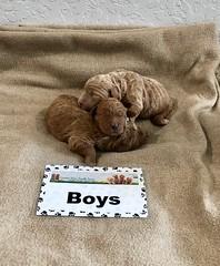 Ginger Boys 1-15