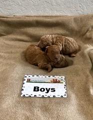 Ginger Boys pic 4 1-15