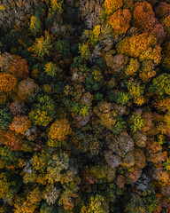 Photo of Some Trees