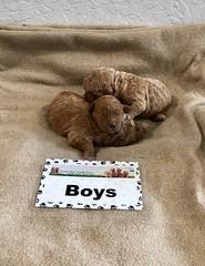 Ginger Boys pic 2 1-15