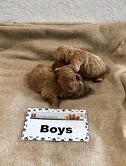 Ginger Boys pic 3 1-15