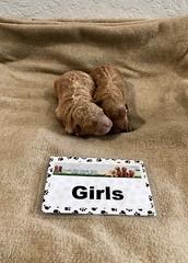 Ginger Girls pic 4 1-15