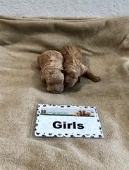 Ginger Girls pic 3 1-15