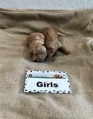 Ginger Girls pic 2 1-15