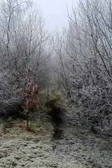 Photo of Birchenwood CP, Kidsgrove, Staffordshire