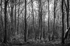 Photo of Bilberry Woods